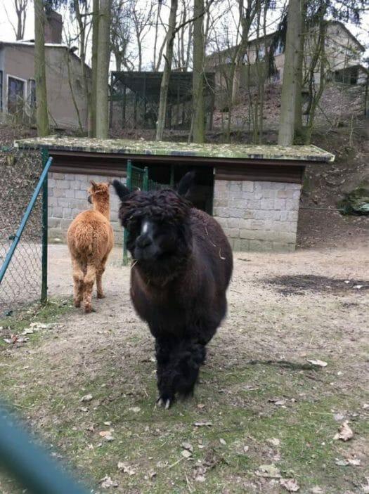 Ausflug mit Kindern in Klingenthal Sachsen - Vogtland - Der Tierpark