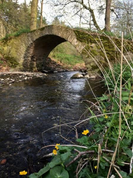 Wanderung - Schafbrücke im Kemnitzbachtal im Vogtland | die Sschafbrücke bei Geilsdorf im Vogtland | historische Steinbogenbrücke