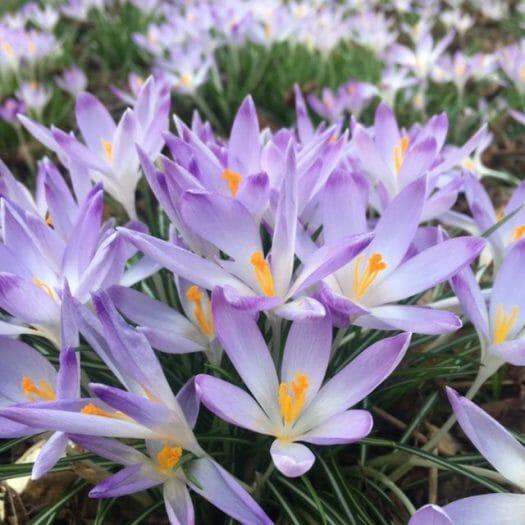 Ausflug im Frühling