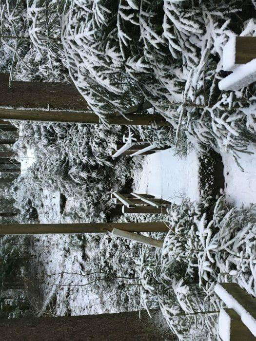 Wanderung im Winter von der Talsperre Muldenberg zum Sauteich  (Vogtland / Sachsen) Kammweg