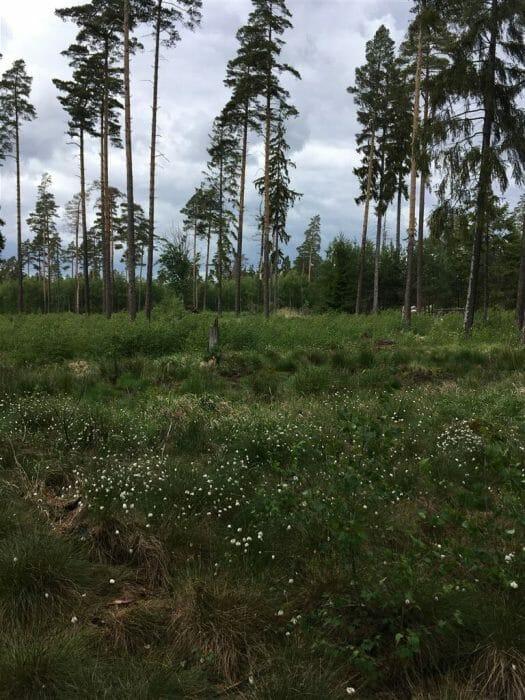 Moorerlebnispfad Pöllwitzer Wald Zeulenroda Thüringen