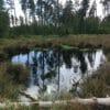 Der Moorerlebnispfad im Pöllwitzer Wald