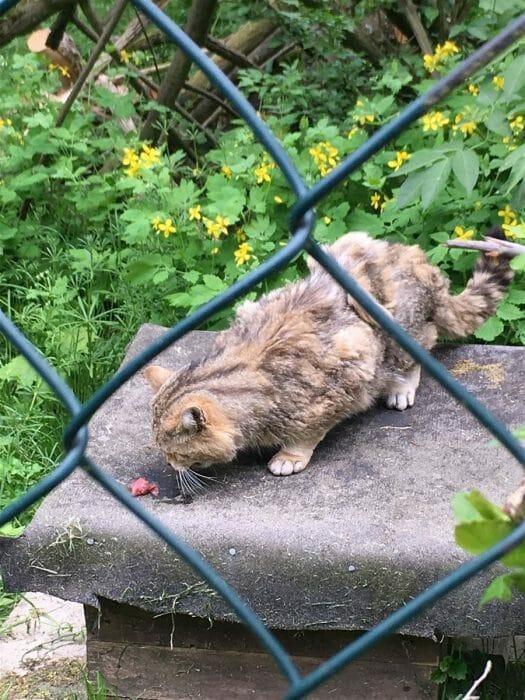 Fütterung Wildkatze  / Erlebnispfad Pfaffengut in Plauen in SachsenFütterung Wildkatze  / Erlebnispfad Pfaffengut in Plauen in Sachsen