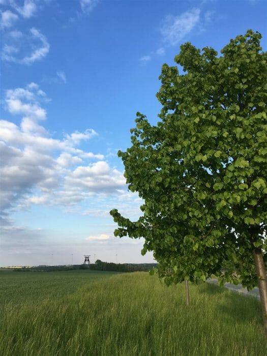 Resurrektion Aurora zwischen der Halde Beerwalde und dem Förderturm Löbichau