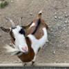 Waldhaus – eine kleine Siedlung mit Tiergehege mitten im Werdauer Wald